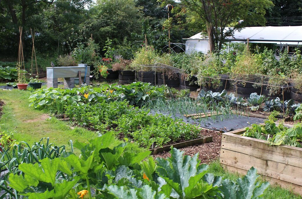 Now's The Time to Start Your Permaculture Garden